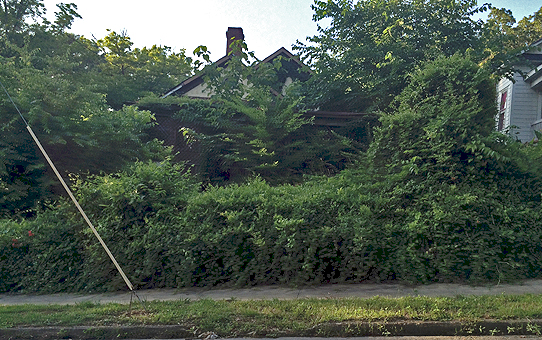Blighted house 2